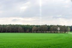 Łąka i las Obrazy Royalty Free
