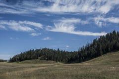 Łąka i las przy Uroczystego jaru północy obręczem Zdjęcie Stock