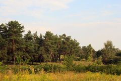 Łąka i las przy zmierzchem Obrazy Stock