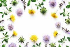 Łąka kwiatów rama Zdjęcie Royalty Free
