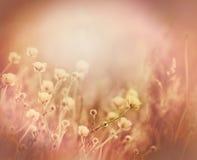 Łąka kwiaty i trawa - kolorów żółtych kwiaty Zdjęcie Royalty Free