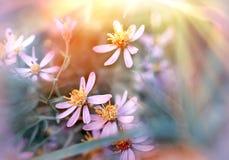 Łąka kwiaty - purpura kwiaty Zdjęcie Royalty Free