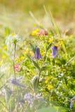 Łąka kwiaty - purpurowi dzwony Fotografia Stock