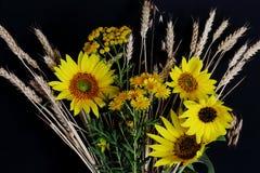 Łąka kwiaty z banatka kolcami i jaskrawi żółci słoneczniki na ciemnym tle Symboliczny pojęcie — lato, kraju styl, słońce obrazy royalty free