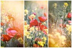 Łąka kwiaty zaświecali światłem słonecznym - piękna natura Fotografia Royalty Free