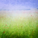 Łąka kwitnie tło Obraz Royalty Free