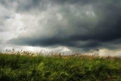 Łąka na wietrznym dniu obrazy royalty free