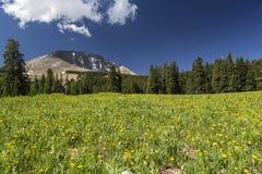 Łąka Peale w Utah i góra zdjęcia stock