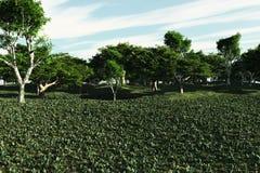 łąka pokojowa Zdjęcia Stock