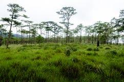 Łąka przy Phu Soja Dao parkiem narodowym Obrazy Royalty Free