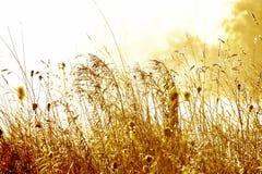 Łąka przy wschodem słońca fotografia royalty free