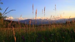 Łąka, Pyrenean krajobraz przy zmierzchem i, Francja zdjęcie wideo