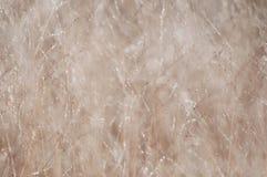 Łąka suchy lato trawy tło Zdjęcia Stock