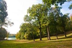 Łąka w Angielskim parku zdjęcie royalty free