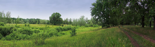 Łąka w drewnach na chmurnym dniu Zdjęcia Stock