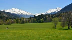 Łąka w górach Zdjęcia Stock