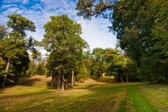 Łąka w parku fotografia stock