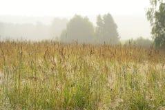 Łąka w ranku słońcu Obraz Stock