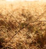 Łąka w rosie w słonecznego dzień Obrazy Stock
