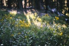 Łąka w sierra Nevada góry Fotografia Royalty Free
