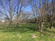 Łąka w wiośnie przed leafing Obrazy Royalty Free