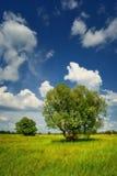 Łąka z drzewami w lecie Fotografia Royalty Free