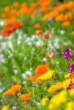 Łąka z kolorowymi kwiatami zdjęcia royalty free