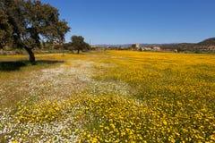 Łąka z koloru żółtego drzewem i kwiatami Zdjęcie Stock