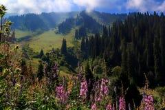 Łąka z kwiatami w górach na tle chmurny niebieskie niebo Zdjęcia Royalty Free