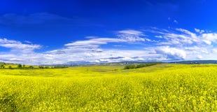Łąka z niebieskim niebem above Zdjęcia Stock