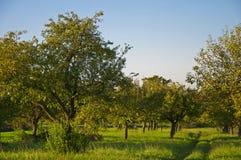 Łąka z rozrzuconymi owocowymi drzewami Obraz Stock