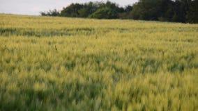Łąka z singin ` ptakami zbiory