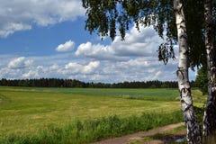 Łąka z wapno drzewami Zdjęcia Stock