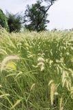 Łąka z wiatrem Obraz Stock