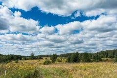 Łąka z wiejskiej drogi i koloru żółtego wildflowers Zdjęcia Stock