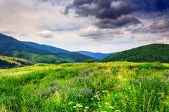 Łąka z ziele w górach Obraz Royalty Free
