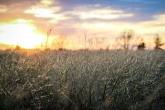 Łąka z zmierzchem Fotografia Stock