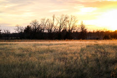 Łąka zmierzch i pole Obraz Stock