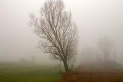 Łąki i pola na mgłowym zdjęcia stock