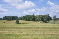 Łąki i siana rolki Niebieskie niebo i piękna natura obraz royalty free