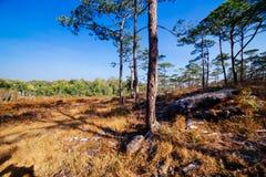 Łąki i sosna lasy fotografia stock
