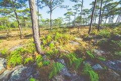 Łąki i sosna lasy zdjęcie royalty free
