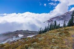 Łąki i sosny przed śnieżnymi górami zdjęcie stock