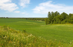 łąki lato Obrazy Royalty Free