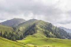 Łąki na wierzchołku góra zdjęcia stock