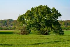 Łąki, pola i pojedynczy drzewo w Ruhraue blisko Mintard, obraz stock