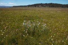 Łąki pola kwiaty Fotografia Stock
