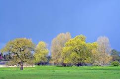 Łąki przy Elbe zdjęcie stock