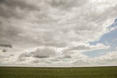 Łąki Salisbury równina clody nieba i cakle -/ zdjęcia stock