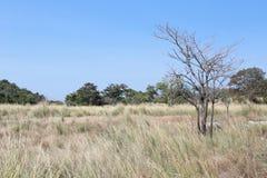 Łąki tropikalny las w Tajlandia zdjęcia stock